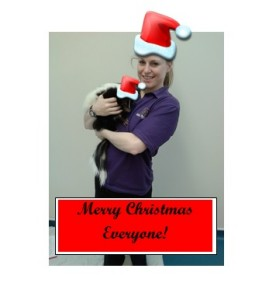 Merry Christmas everyone , from me and Christmas Skunk!
