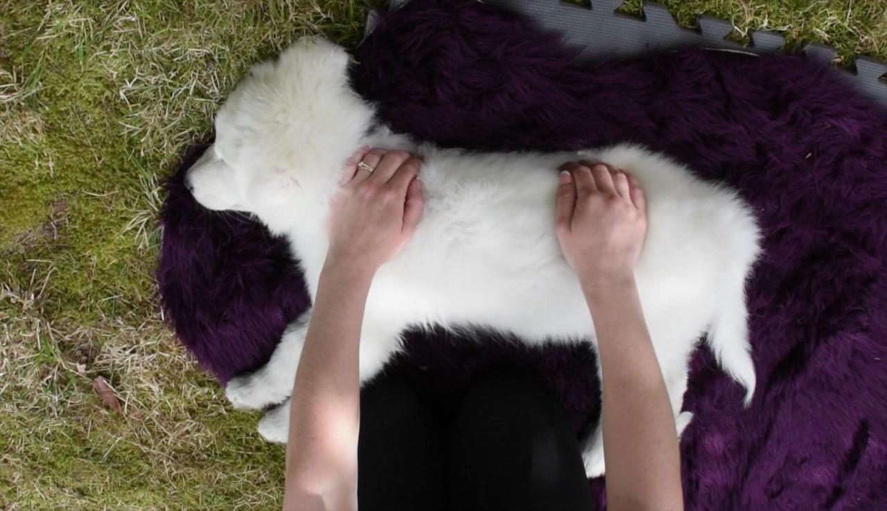 Puppy Massage DVD screenshots