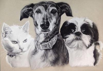 beautiful animal portraits
