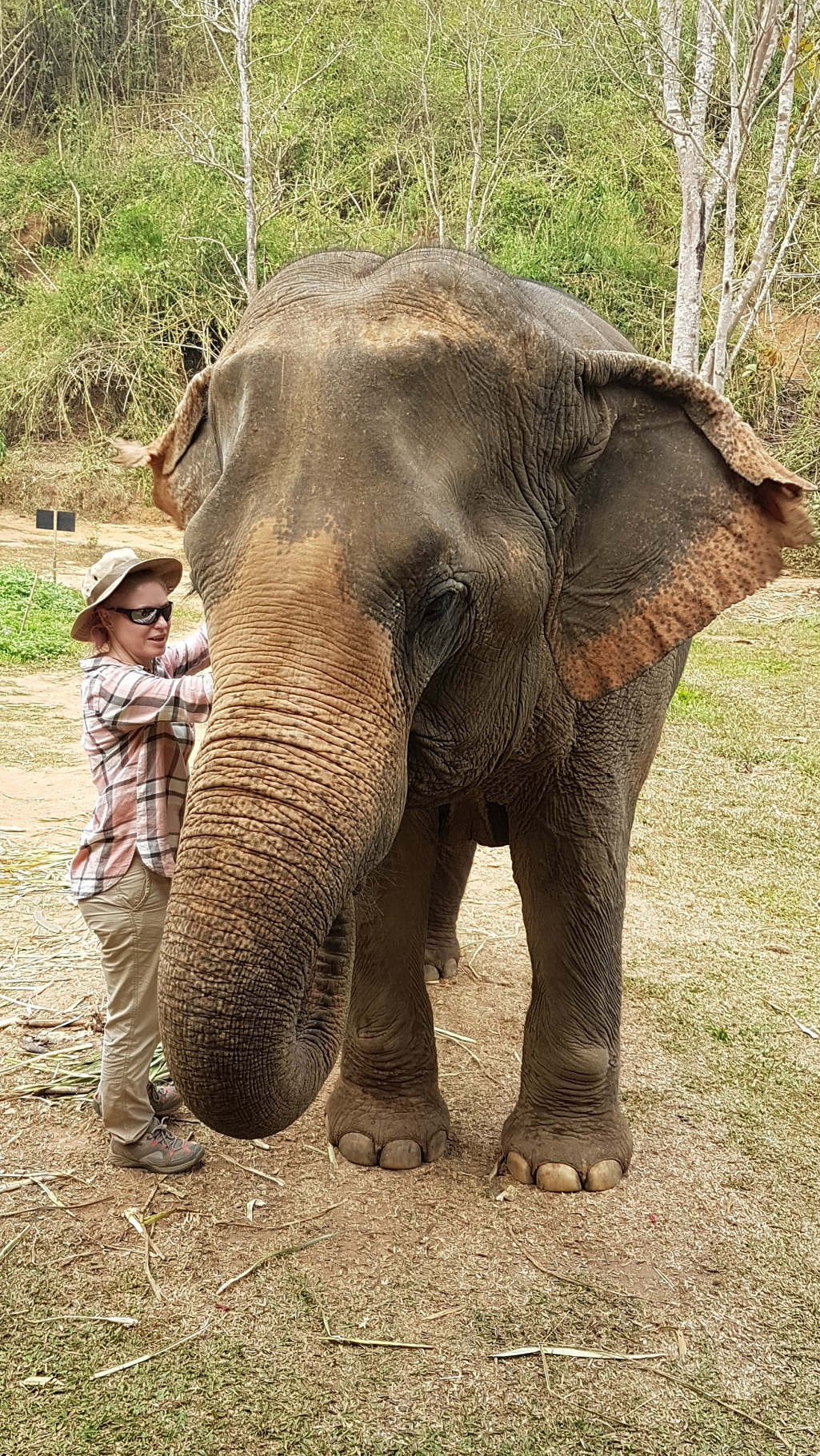 Me treating an elephant
